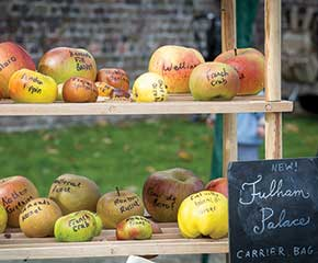 APPLE DAY CELEBRATION